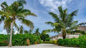 Maldive: La vacanza da sogno!!